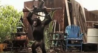 Ape With An AK-47